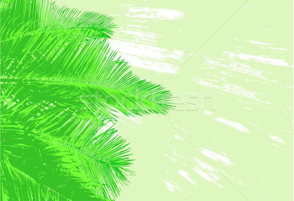 Palm fronds Stock photo © Tawng