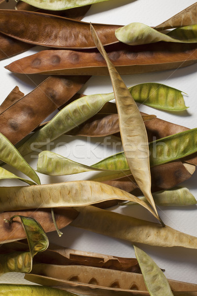 Acacia pods Stock photo © Tawng