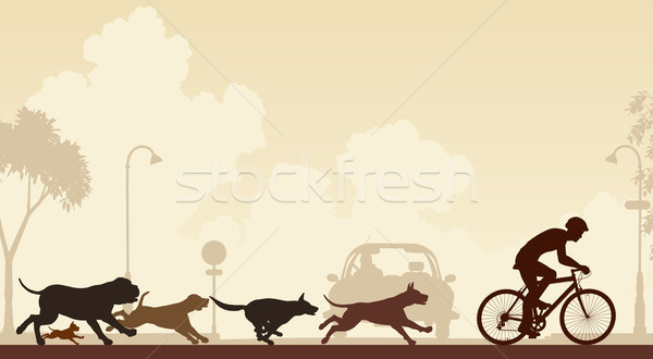 Dogs chasing cyclist Stock photo © Tawng