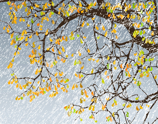 Snowstorm Stock photo © Tawng