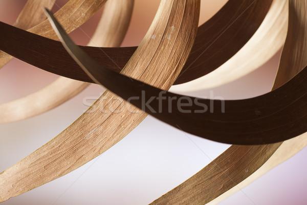 Leaf arcs Stock photo © Tawng