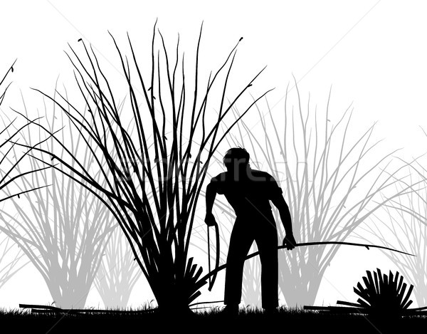 Man coppicing silhouette Stock photo © Tawng