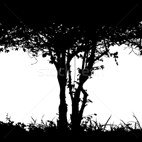 Stock photo: Bush detail silhouette