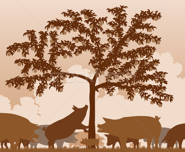 Porcs pommier tous séparé Photo stock © Tawng