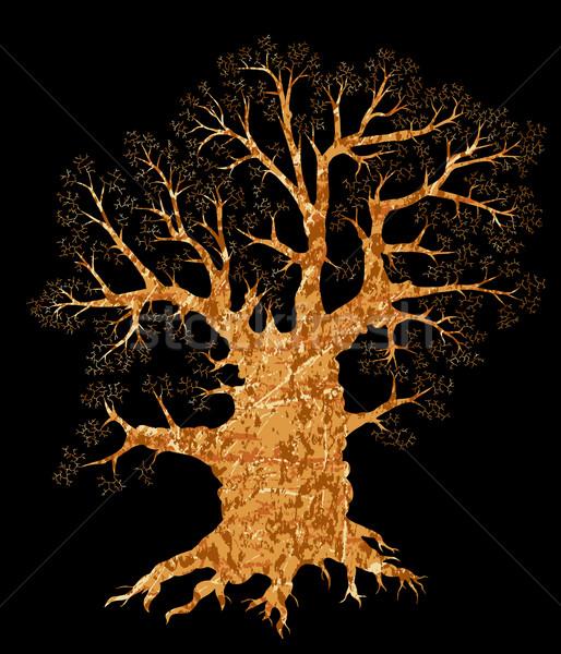 Oak tree Stock photo © Tawng