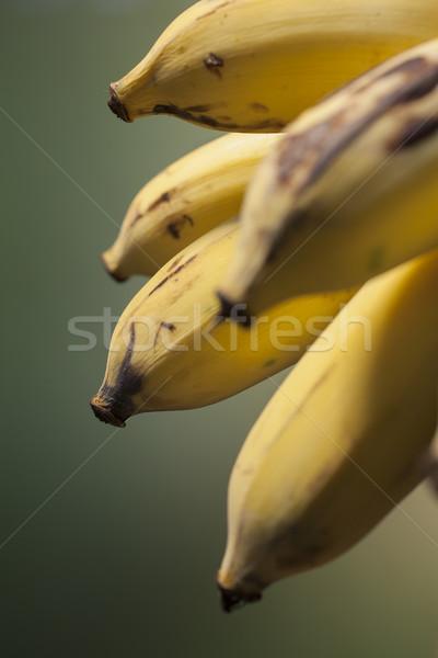 Bananów szczegół dojrzały tajska Zdjęcia stock © Tawng