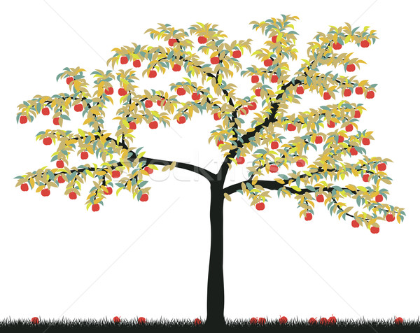 Apple tree Stock photo © Tawng