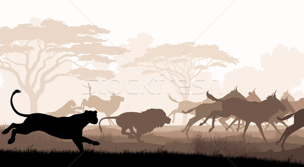 Hunting lions Stock photo © Tawng
