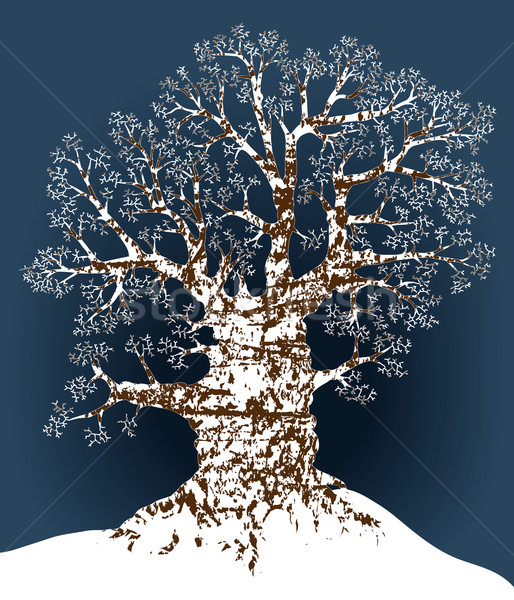Snow oak Stock photo © Tawng