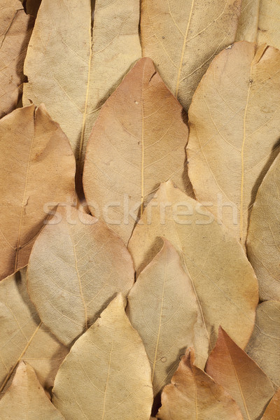 Dried bay leaves Stock photo © Tawng