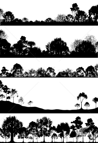 Stock photo: Woodland foregrounds