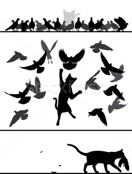 Cat amongst pigeons Stock photo © Tawng