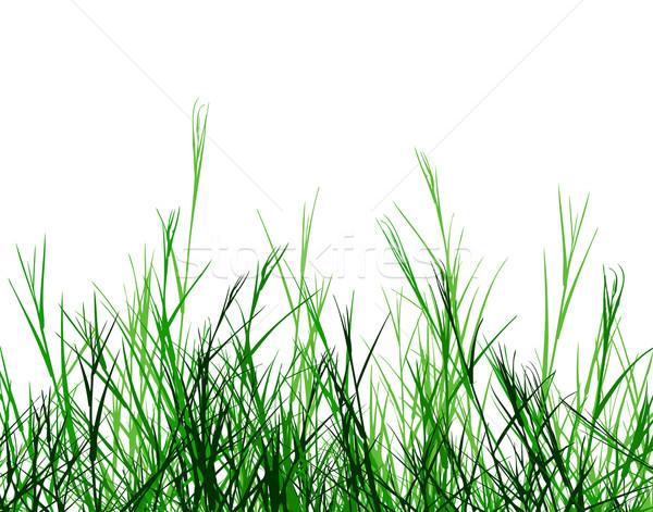 Rêche herbe vecteur premier plan design Photo stock © Tawng