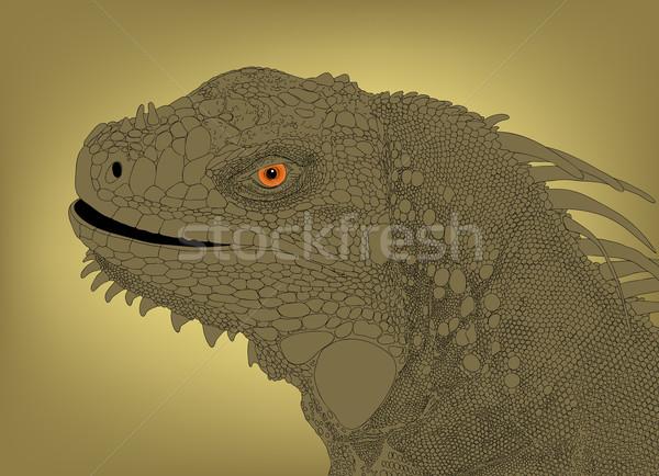 Iguana cabeça detalhado textura balança Foto stock © Tawng