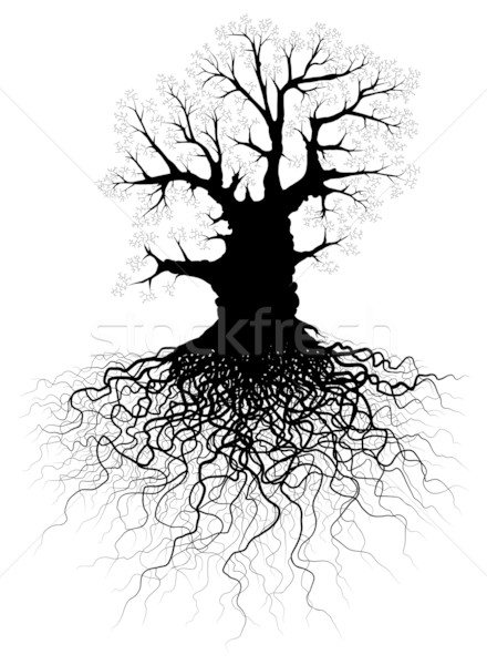Tree with roots Stock photo © Tawng