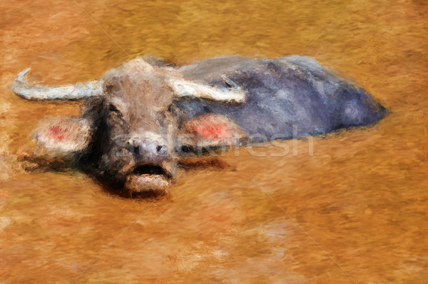 Water buffalo Stock photo © Tawng