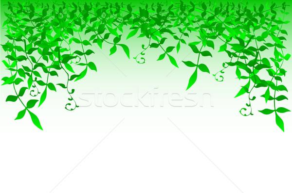 Bushy Stock photo © Tawng