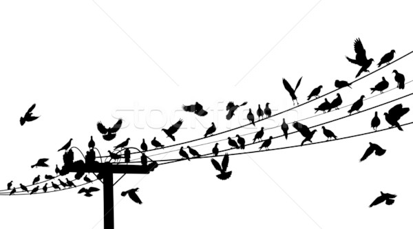 Bird roost Stock photo © Tawng
