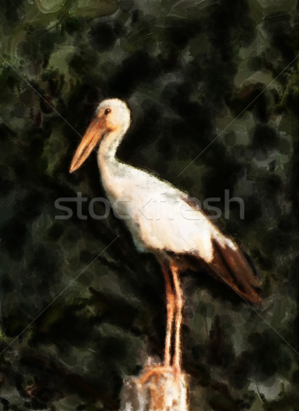 Openbill stork painting Stock photo © Tawng
