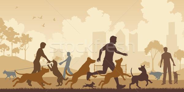 Dog park Stock photo © Tawng