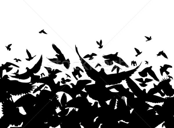 Pigeon flight Stock photo © Tawng