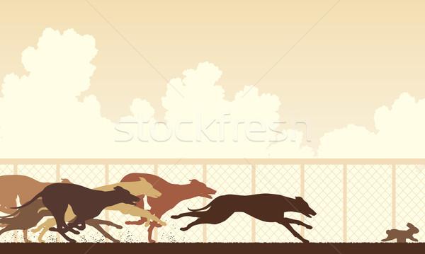 Greyhound dog race Stock photo © Tawng