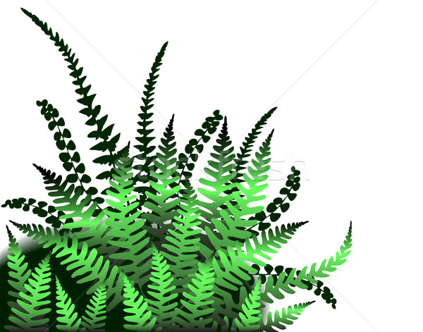 Ferns Stock photo © Tawng
