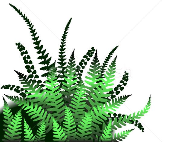 Stock photo: Ferns
