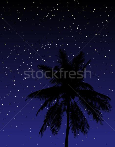 Csillagok szerkeszthető pálmafa éjszaka égbolt fa Stock fotó © Tawng