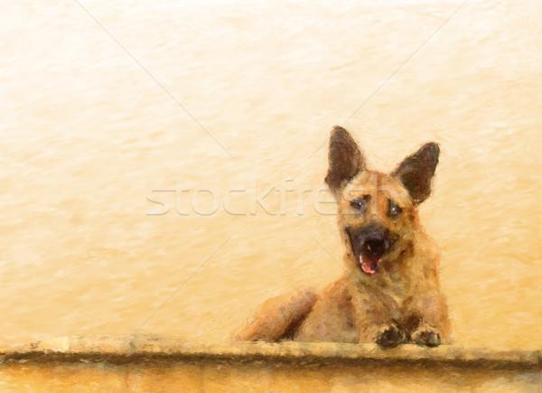 Walldog Stock photo © Tawng