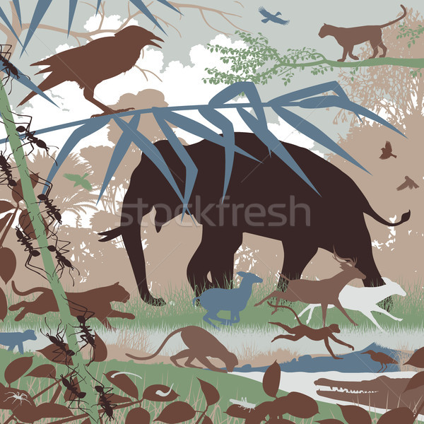 Stock photo: Asian wildlife