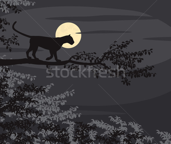 Leopard moon Stock photo © Tawng