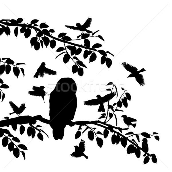 птиц совы вектора Сток-фото © Tawng