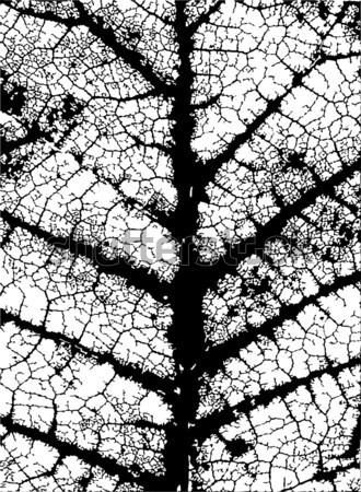 Yaprak damarlar düzenlenebilir vektör grunge model Stok fotoğraf © Tawng