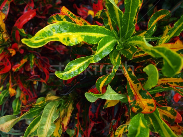 tropical plant background Stock photo © tdoes
