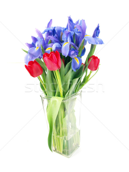 Pourpre rouge bouquet tulipes Photo stock © tdoes