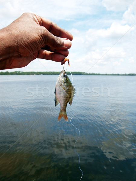 small fish Stock photo © tdoes