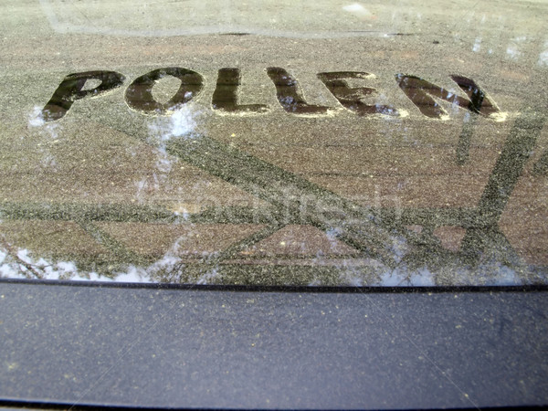 pollen covered table Stock photo © tdoes