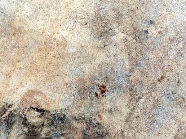 texture cured animal skin Stock photo © tdoes