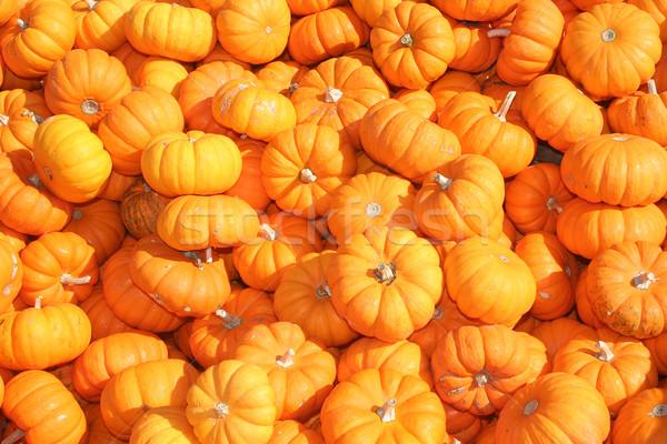 Miniatura pomarańczowy żywności charakter jesienią Zdjęcia stock © TeamC
