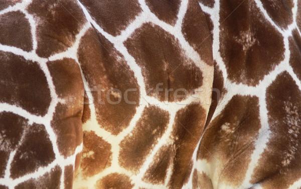 żyrafa wzór tekstury tle Zdjęcia stock © TeamC