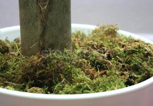 Mech charakter zielone roślin Zdjęcia stock © TeamC