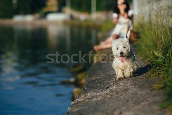 Kız köpek kıyı oynama su bahar Stok fotoğraf © tekso