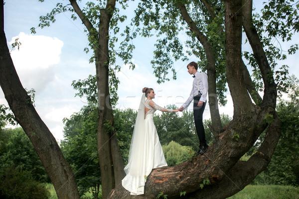 Stock fotó: Menyasszony · vőlegény · fa · gyönyörű · pár · jókedv
