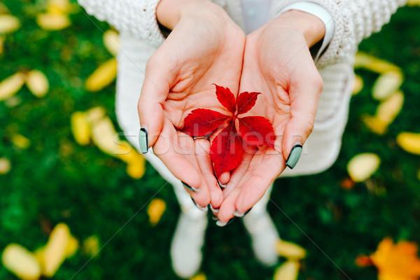 Zdjęcia stock: Dziewczyna · ręce · piękna · jesienią · liści