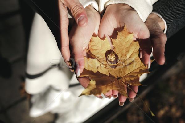 Golden Trauringe trocken Blätter Blatt Paar Stock foto © tekso