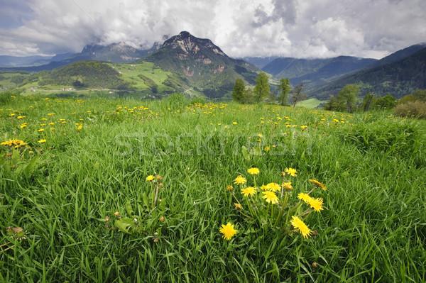 草原 アルプス山脈 タンポポ 空 花 雲 ストックフォト © tepic