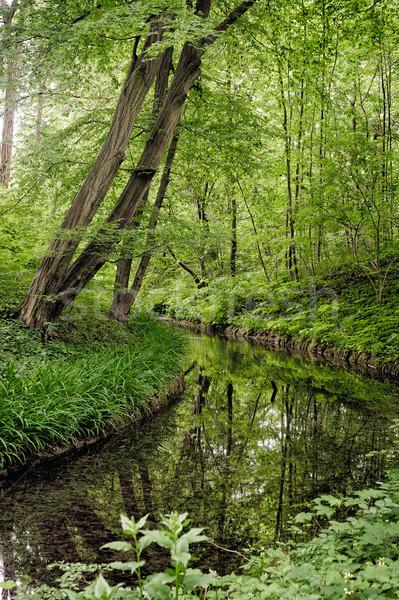 美しい 夏 風景 小川 森林 水 ストックフォト © tepic