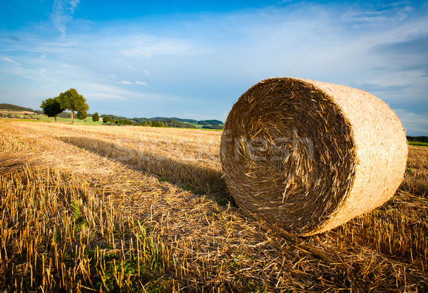 Hay Bale on a harvested Field Stock photo © tepic