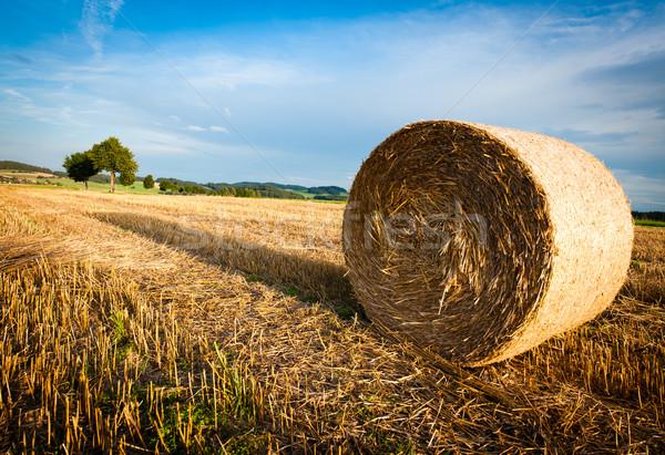 乾草 俵 フィールド 遅い 午後 太陽 ストックフォト © tepic